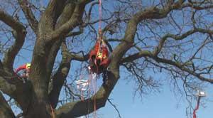 H. Stoppelhaar Baumpflege